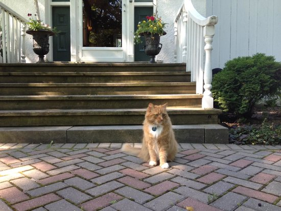 Historic Lyons House: Ruby the handsome three-legged tom