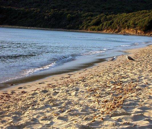Cala Violina : via la gente arrivano i proprietari della spiaggia