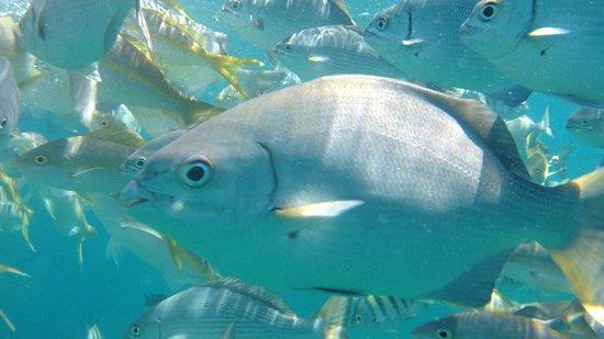 Melia Las Antillas: podwodne atrakcje