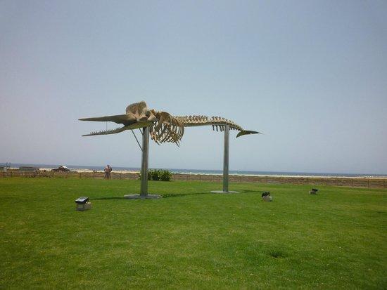 Jandía: whale