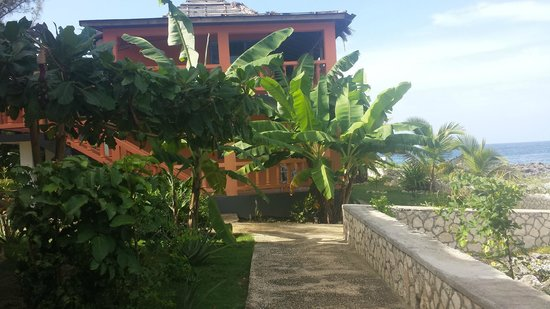 Negril Escape Resort & Spa: Landscaping around the rooms