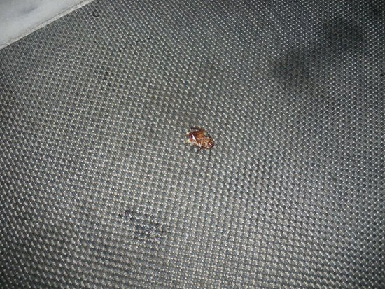Hersonissos Palace Hotel : dead cockroach in s star room