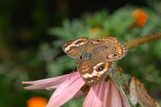 Chattahoochee Nature Center : butterfly