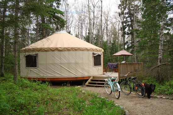 Flora Bora Forest Lodging : Betty yurt, with our borrowed bicycles and borrowed dog, Tally