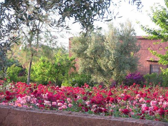 Ecolodge Quaryati : jardin