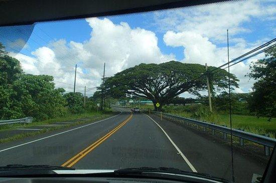 Kilauea Iki Trail: Island of Hawaii
