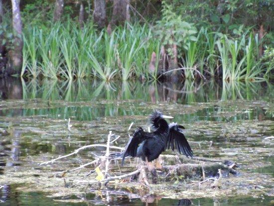 Wakulla Springs Lodge : More wildlife