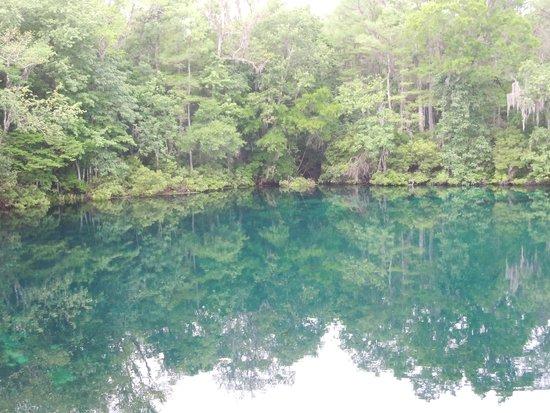 Wakulla Springs Lodge: More of the springs