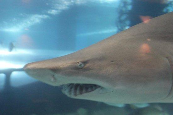 Greater Cleveland Aquarium: shark tank!