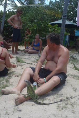 Pinel Island: beers with iguanas !!!