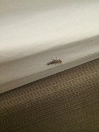 Residence Inn Parsippany, NJ Bug in Bed - Room 112 July 16, 2014