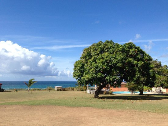 Hector's by the Sea: Looking towards our casita on the other side of the gigantic mango tree