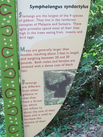 Nashville Zoo : Different types of animals at the zoo