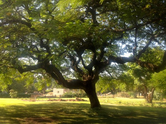 Torburnlea: Shade trees