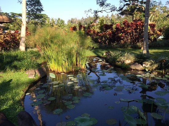Villa Semana: Impeccable landscaping