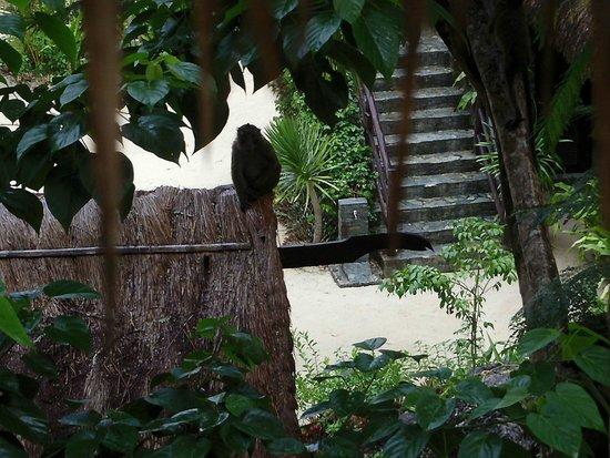 El Nido Resorts Lagen Island : さる