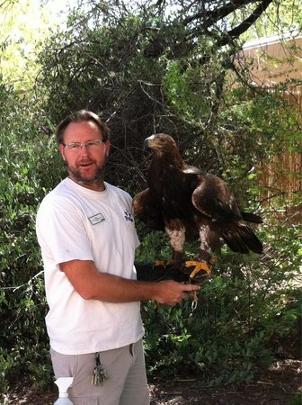 Phoenix Zoo : This amazing eagle greeted us as we entered the zoo!
