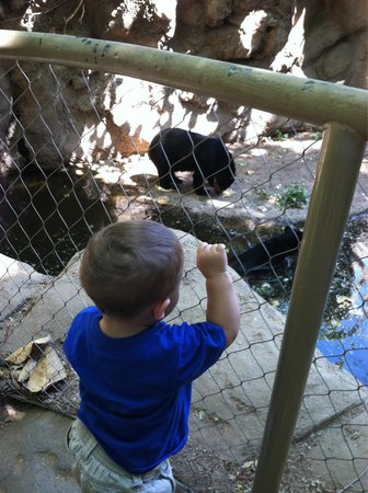 Phoenix Zoo : My grandson had a birds eye view of the spectacle bears!
