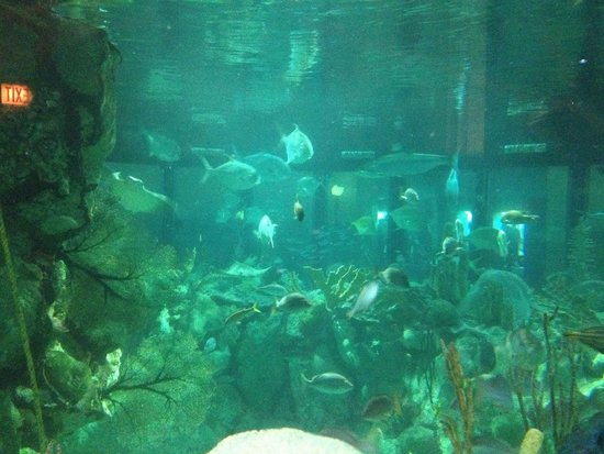 Shedd Aquarium: Wild reef exhibit, felt like you were in there with the fish!