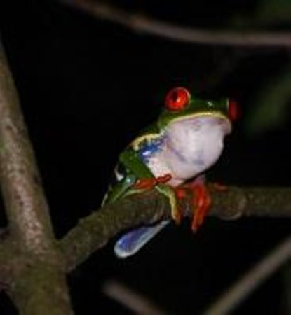 Ecocentro Danaus: frog
