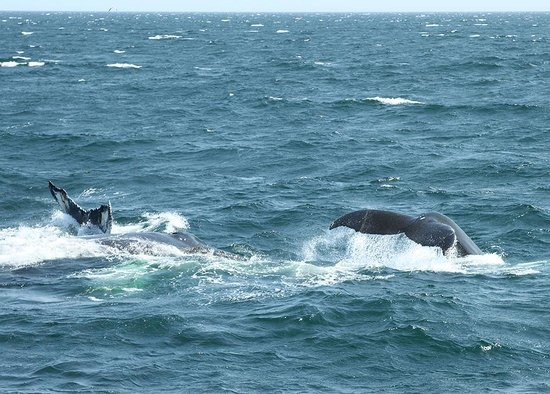 Hyannis Whale Watcher Cruises: Whale tails 7/13/14 Dave Doolittle