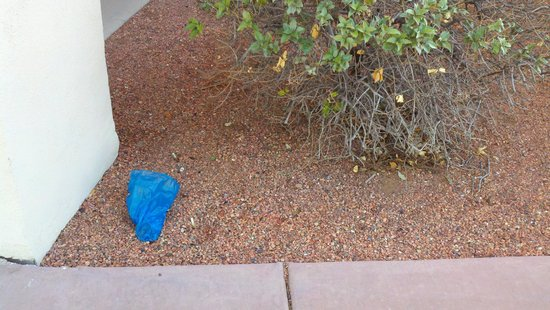 Super 8 Page/Lake Powell : Dog Poo left for a week