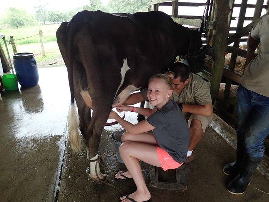 Hotel El Silencio del Campo: Milking Cow