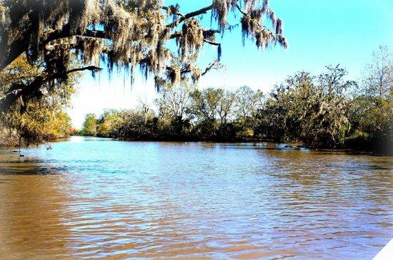 Louisiana Tour Company : The Swamp
