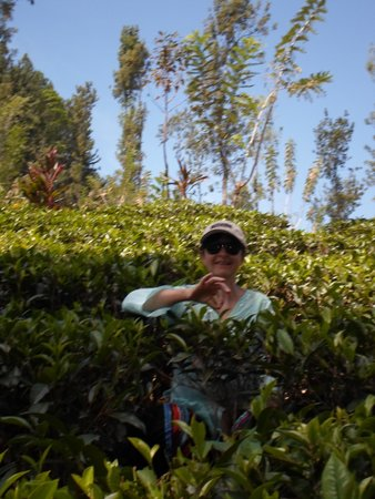 The Tea Cottages Resort & Spa : learning the tea trade?