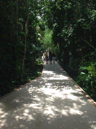 Occidental Cozumel: walkways
