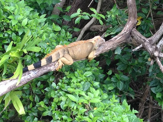Occidental Cozumel: hotel pets...lol