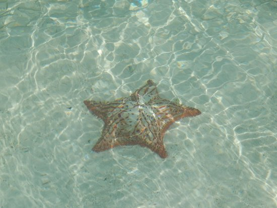 Praia Crasky: Estrelas do mar