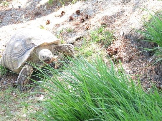 Karmoy Municipality, นอร์เวย์: watching the tortise