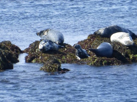 Brier Island : Seals at Seal Cove
