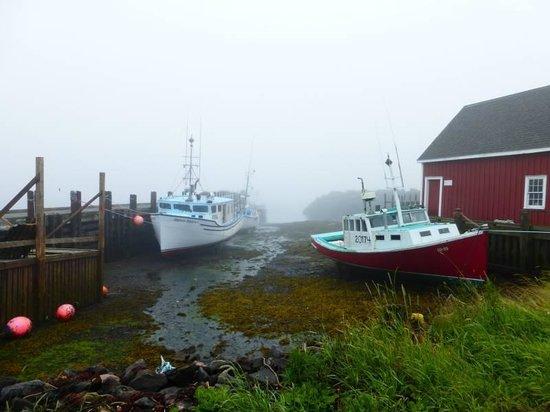Brier Island : Low tide!