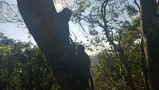 Estatua de Cristo el Redentor: Macaco visto no morro