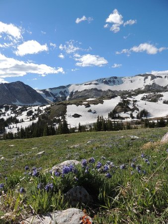 Medicine Bow National Forest: Medicine Bow