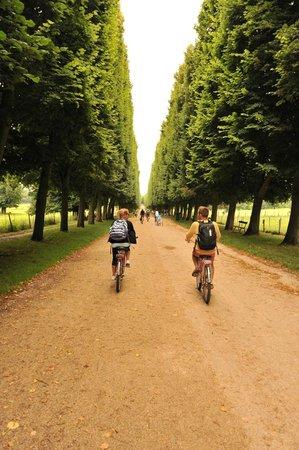 Fat Tire Tours Paris: riding through versailles