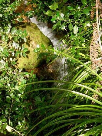 Hauraki Rail Trail Thames: Small waterfall beside trail