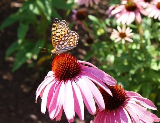 Denver Botanic Gardens: Summer in the Gardens