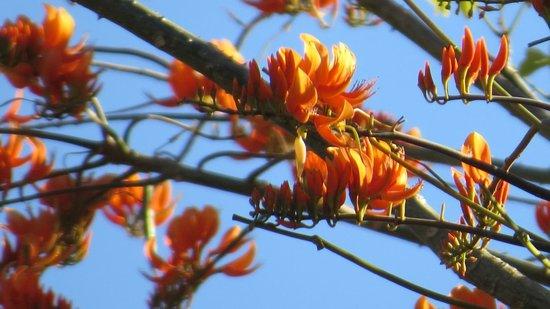 Rinconcito Verde: Flores de poro