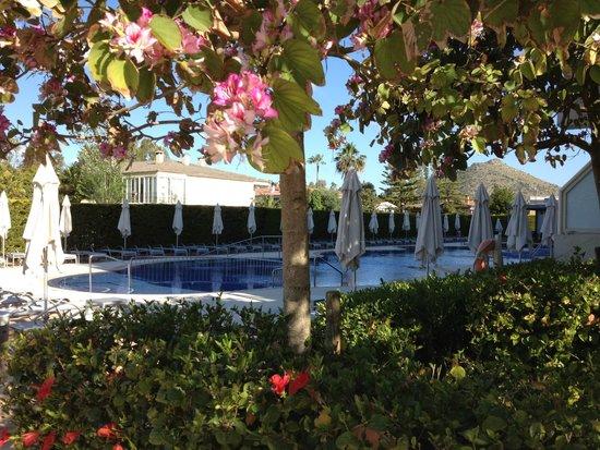 Las Gaviotas Suites Hotel : Pool