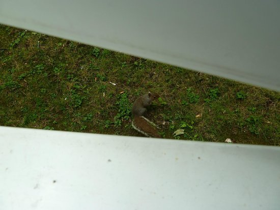 Carlton Park Hotel: friendly squirrel outside the room window