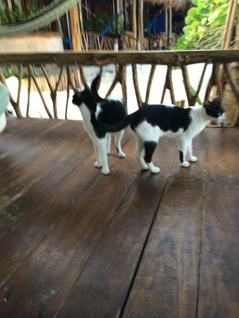 Ahau Tulum: Our siamese cats! Haha!