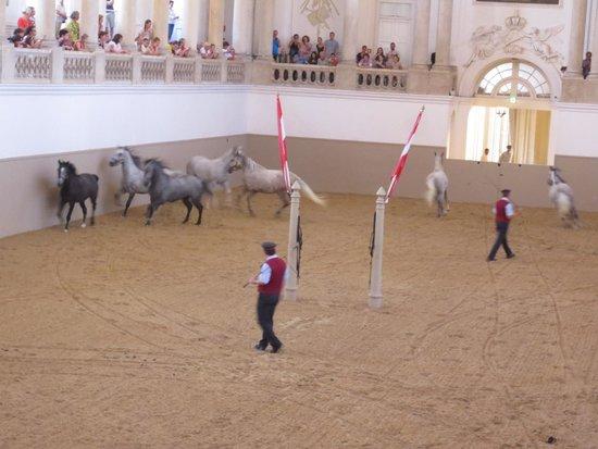 "Spanish Riding School : ""Piber meets Vienna"" show"