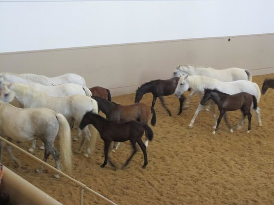 "Spanish Riding School: ""Piber meets Vienna"" show"