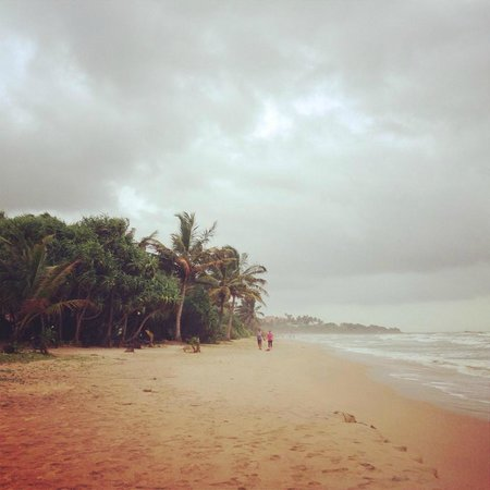 Bentota Beach by Cinnamon : beach with yellow sand
