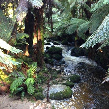 St Columba Waterfall : Rainforest - St Columba Falls