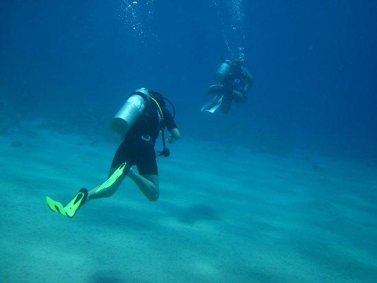 Pyramids Diving Center: Дайвинг на локальном рифе