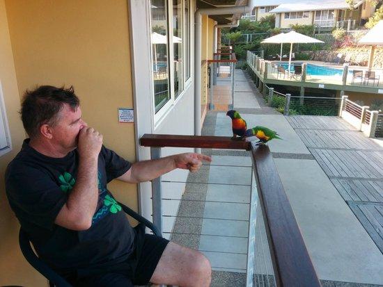 Tathra Beach House: bird friends